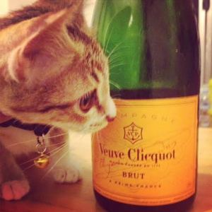 Cats and bubbly